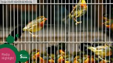 New method to combat illegal wildlife trade reveals whether animals were raised in captivity or captured from the wild