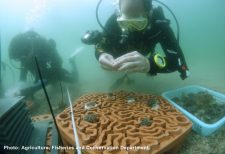 HKU research team seeks to restore Hong Kong coral reefs with 3D-printed tiles