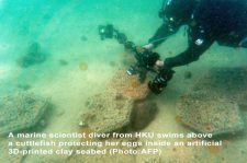 Hong Kong's fragile coral reefs boosted by 3D-printed clay tiles